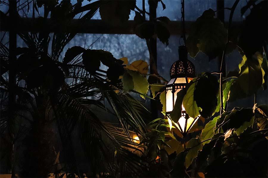 Exotische planten - Tuinderij Buitenpost